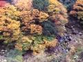 菊池渓谷その1